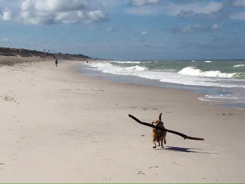 Jack mit mittlerem Stock am Strand